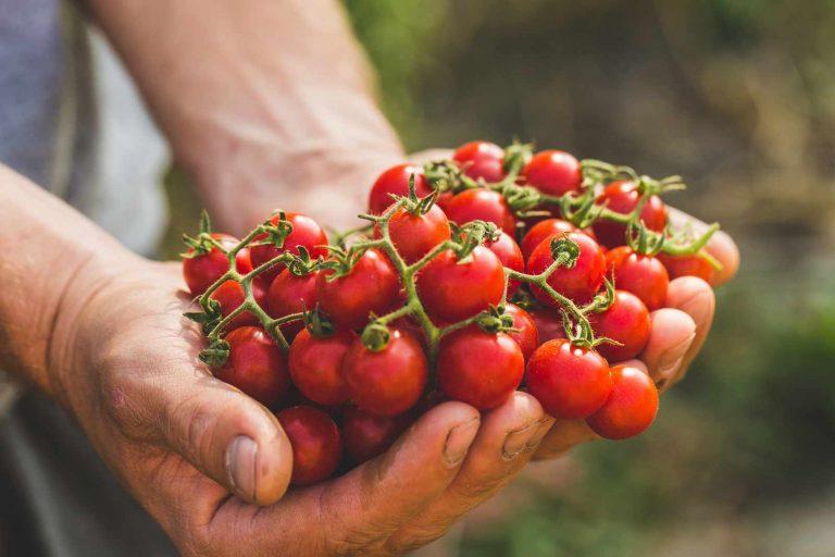 Portfolio Organic food